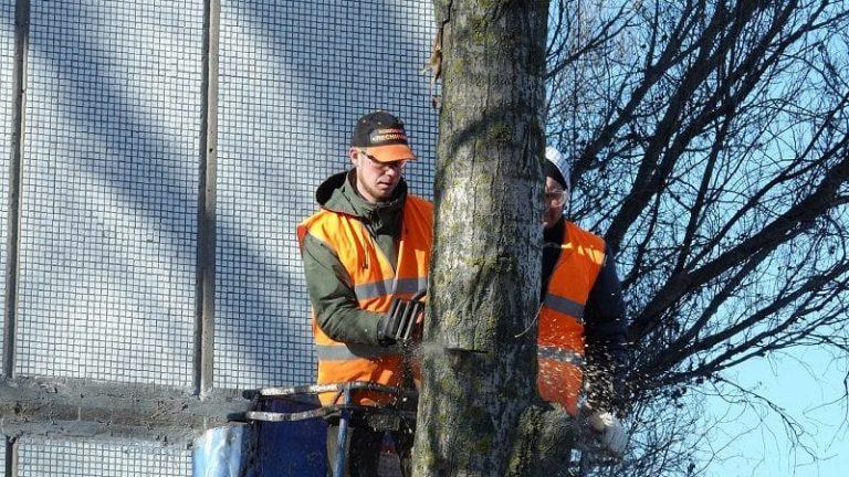 Consider a Tree Removal Company